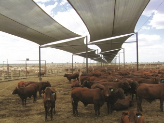 Fabrics suited to Cattle Shade